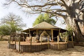 The baobabs of Tarangire