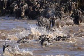Serengeti Highway
