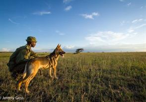 Dog Tracking Units to Fight Poaching