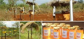 The Elephants and Bees Project in Tanzania