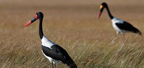 Hartley's top destinations in Africa for birding safaris