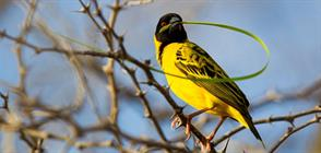 Green season Birding Safari in Zambia