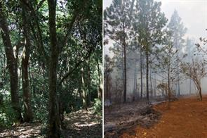 HELP SAVE THE FORESTS IN ZOMBA, MALAWI